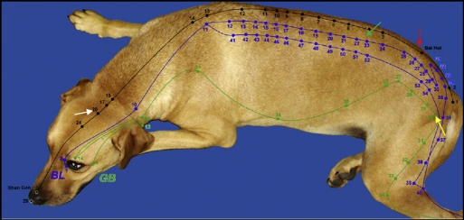pet acupuncture - dog pic