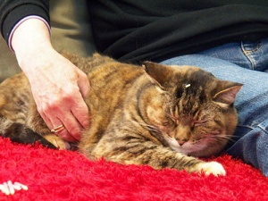 acupuncture-with-a-cat
