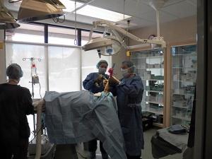 orthopedic-surgery