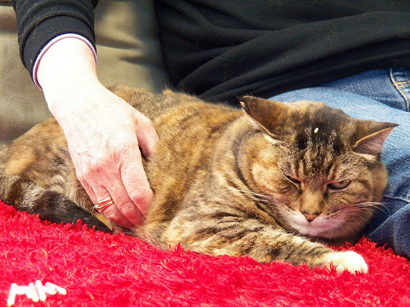 Certified Cat-Friendly Practice 2