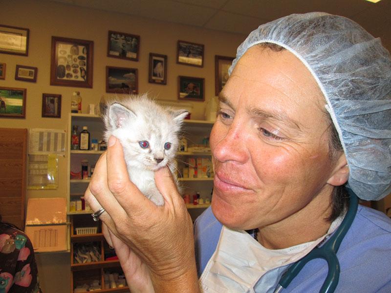 Pediatrics – Puppies and Kittens 1