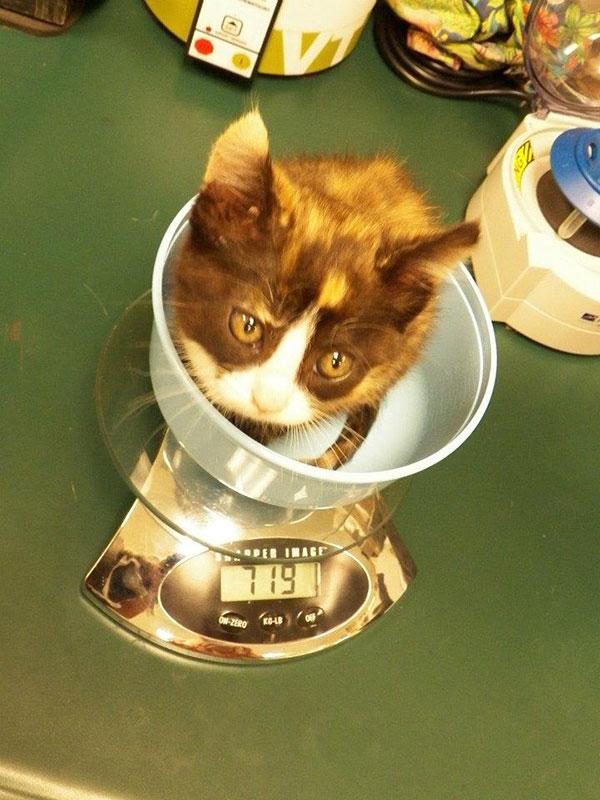 Pediatrics – Puppies and Kittens 3