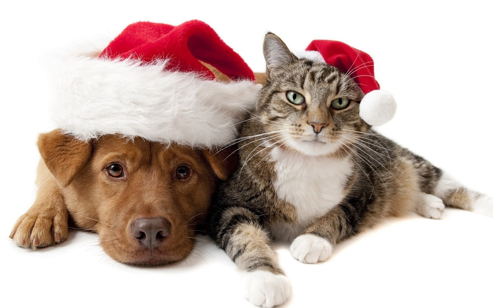 Peace Dog and Cat Christmas Free