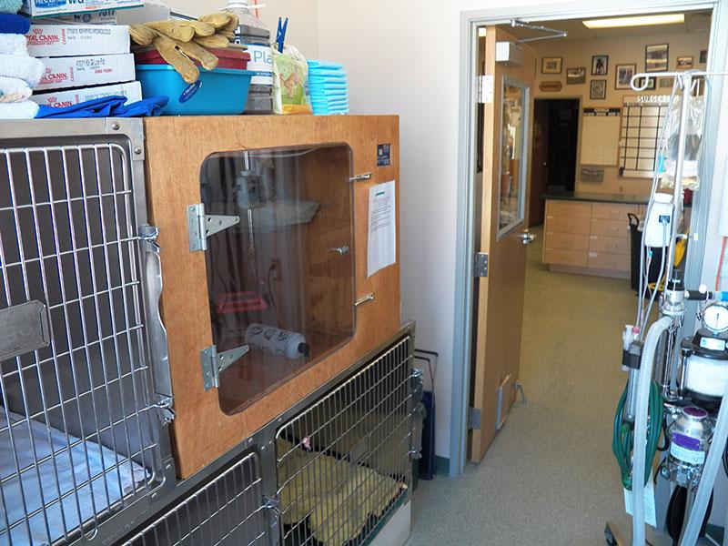 Reptile critical care cage