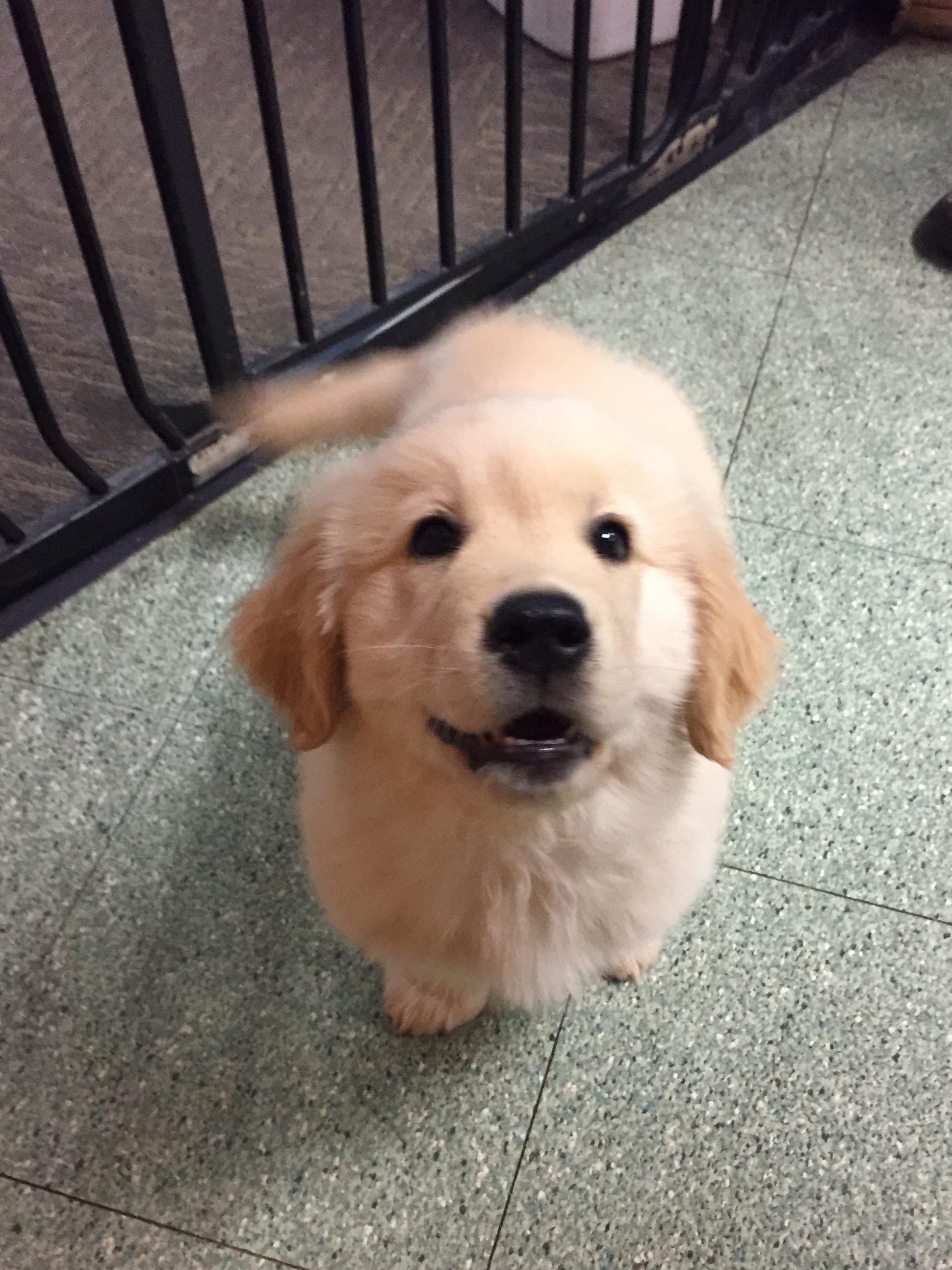 Pediatrics – Puppies and Kittens 4