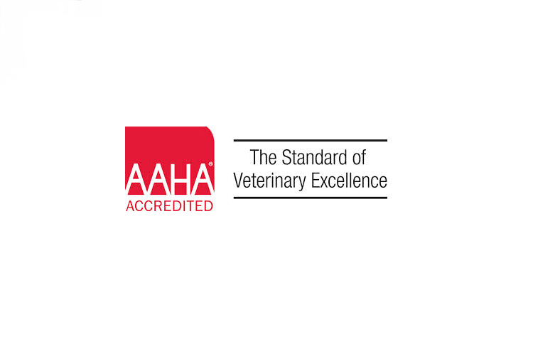 What does it mean to be AAHA certified?