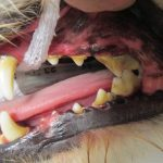 Dental Health 3