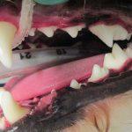 Dental Health 4