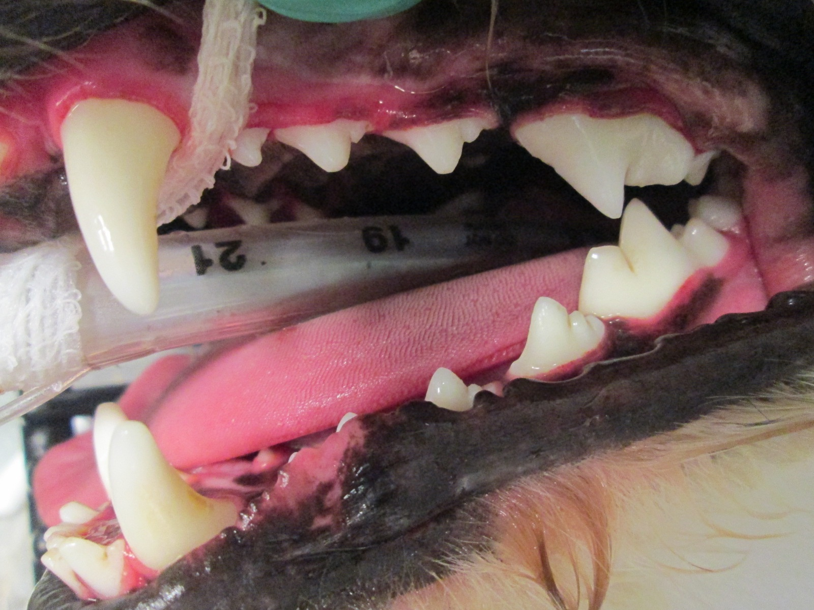 Dental Cleaning 2