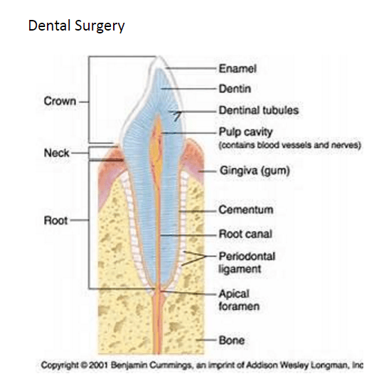 Dental Surgery & Tooth Extractions 1