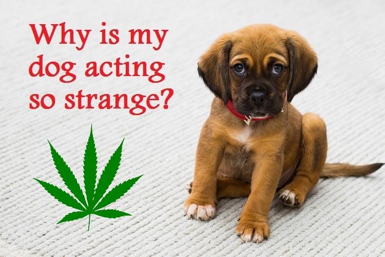 animals and marijuana