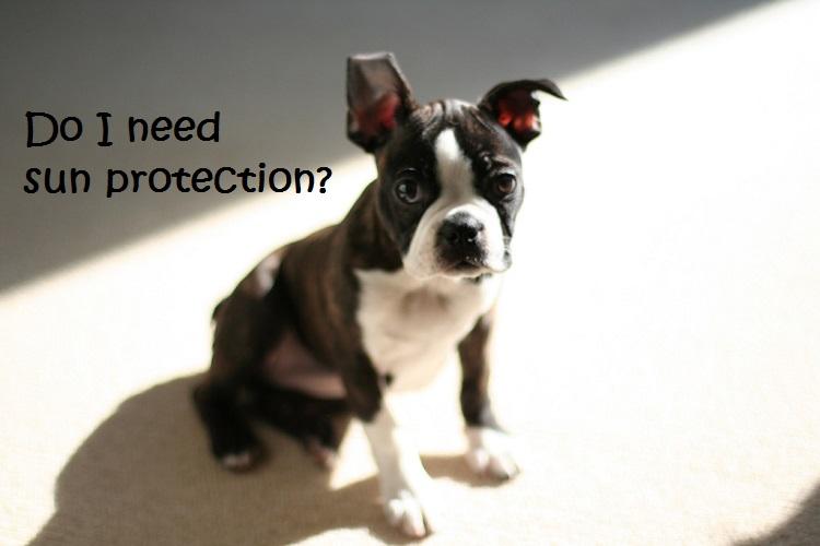 UV Precautions for Pets