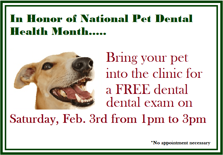 free dental check