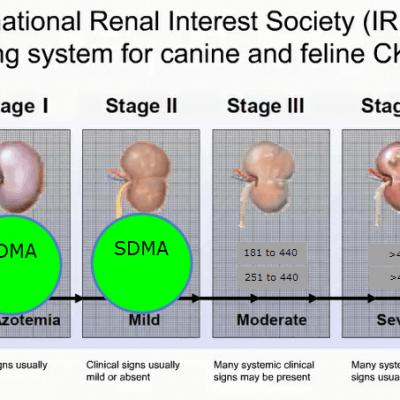 Kidney Disease and SDMA Testing
