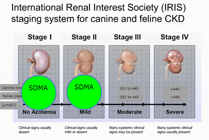 Kidney Disease and SDMA Testing