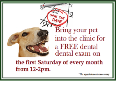 Free Dental Check Saturdays