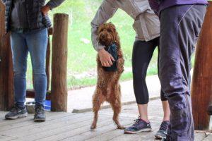 Tails n Trails Pet