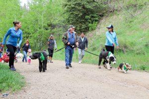 tails n trails pet walk