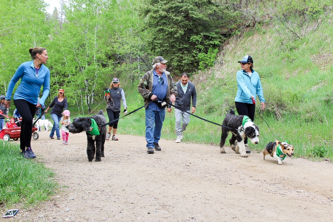tails n trails pet walk