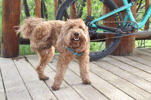 tails n trails pets