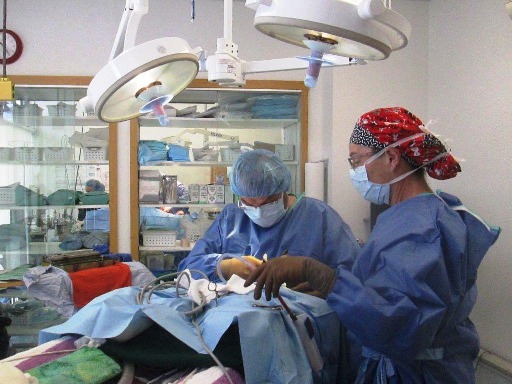Pet Kare Surgery