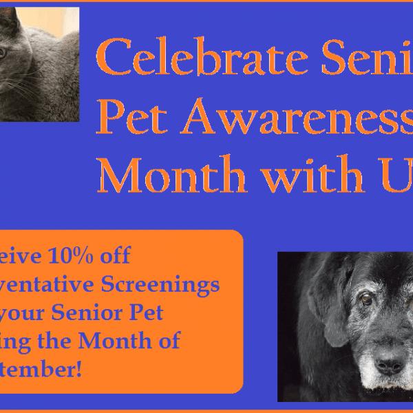 Senior Pet awareness