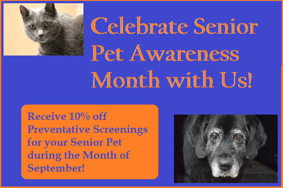 Senior Pet awareness