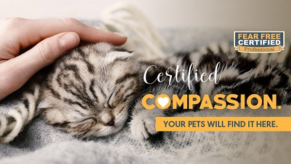 Certified Fear Free Compassion Pet Professional